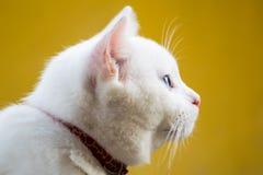 Fine del ritratto del gatto su, soltanto il raccolto capo, guardante alla cima, gatto bianco su giallo Fotografia Stock Libera da Diritti