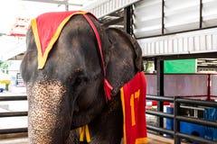Fine del ritratto sull'elefante nello zoo fotografia stock libera da diritti