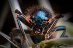 Fine del ` s dell'insetto su Immagini Stock