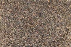 Fine del seme di Nyger su fotografia stock