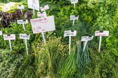 Fine del supporto dell'erba su al mercato del ` s dell'agricoltore Immagine Stock Libera da Diritti
