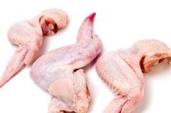 Fine dell'ala di pollo in su fotografia stock libera da diritti