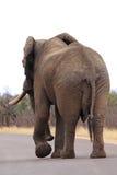 Fine dell'elefante africano in su Fotografia Stock