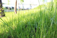 Fine dell'erba verde in su Molla del sole e fondo di giorno di estate fotografia stock libera da diritti