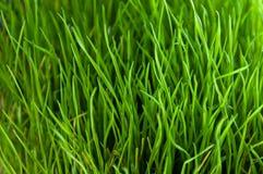 Fine dell'erba verde sul reticolo Fotografia Stock