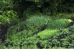 Fine dell'estate Erbe, fiori ed ortaggi nel giardino convenzionale del cortile Giardinaggio amichevole di Eco Immagine Stock Libera da Diritti