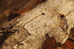 Fine dell'estratto della corteccia di albero su con il tex del fondo dell'estratto del keh del boh Fotografia Stock Libera da Diritti