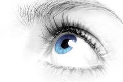 Fine dell'occhio azzurro delle femmine in su Fotografia Stock Libera da Diritti
