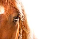 Fine dell'occhio del cavallo su Immagini Stock Libere da Diritti