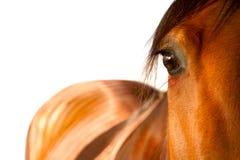 Fine dell'occhio del cavallo su Immagine Stock Libera da Diritti