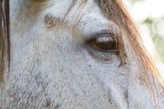 Fine dell'occhio del cavallo su nell'alta chiave Fotografia Stock Libera da Diritti