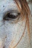 Fine dell'occhio del cavallo su nell'alta chiave Immagine Stock