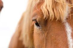 Fine dell'occhio del cavallo su nell'alta chiave Fotografia Stock