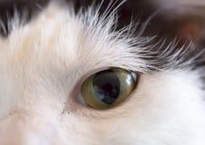 Fine dell'occhio del gatto su Fotografie Stock Libere da Diritti