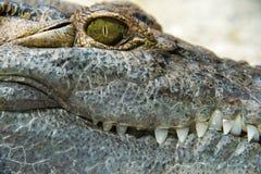 Fine dell'occhio dell'alligatore del coccodrillo su Fotografia Stock