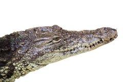 Fine dell'occhio dell'alligatore del coccodrillo su isolata su bianco Immagini Stock
