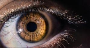 Fine dell'occhio di giallo di Brown su Immagini Stock
