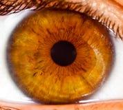 Fine dell'occhio umano in su? Immagine Stock