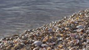 Fine della baia del lago seashell su 4k Florida S.U.A. archivi video