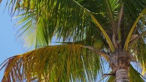Fine della cima del cocco di Miami Beach di giorno di estate su 4k Florida S.U.A. archivi video