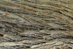 Fine della corteccia di albero su Fotografia Stock