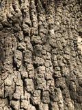 Fine della corteccia di albero su fotografie stock