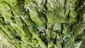 Fine della corteccia di albero su Giorno luminoso soleggiato archivi video