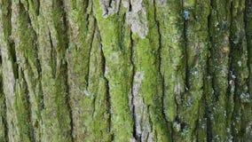 Fine della corteccia di albero su Giorno luminoso soleggiato video d archivio