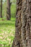 Fine della corteccia di albero su sulla metà del telaio Fotografia Stock