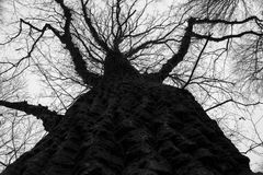 Fine della crosta dell'albero alto su fotografia stock libera da diritti