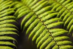 Fine della felce - sul fogliame dettagliato della pianta verde fotografie stock libere da diritti