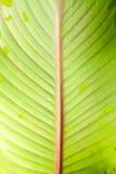 Fine della foglia della pianta verde su Immagine Stock