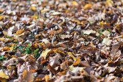 Fine della foglia di autunno su marrone di vista caduto dall'albero Fotografia Stock