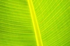Fine della fronda della palma in su fotografie stock