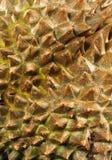 Fine della frutta del Durian su immagini stock