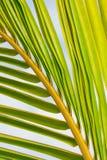 Fine della palma in su Immagine Stock