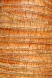 Fine della palma in su Fotografie Stock Libere da Diritti