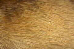 Fine della pelliccia del cane in su Immagini Stock