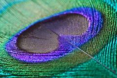 Fine della piuma del pavone in su Immagini Stock