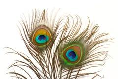 Fine della piuma del pavone in su Immagine Stock Libera da Diritti