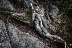 Fine della putrefazione dell'albero su in foresta immagine stock libera da diritti