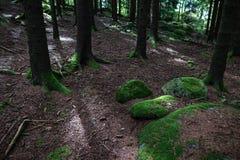 Fine della radice dell'albero su in foresta fotografie stock libere da diritti