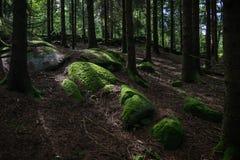 Fine della radice dell'albero su in foresta immagine stock libera da diritti