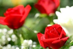 Fine della Rosa in su fotografia stock