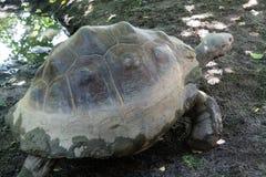 Fine della tartaruga di Galapagos su fotografia fotografia stock libera da diritti