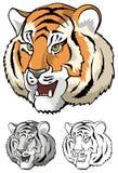 Fine della testa della tigre in su Immagini Stock