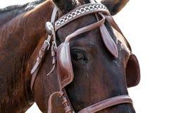 Fine della testa di cavallo isolata su bianco Fotografie Stock
