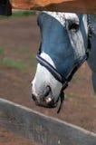 Fine della testa di cavallo in su Fotografie Stock