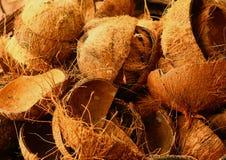 Fine delle rimanenze delle coperture della noce di cocco sulla foto Immagine Stock
