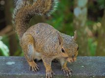 Fine dello scoiattolo di HDR su 2 immagini stock
